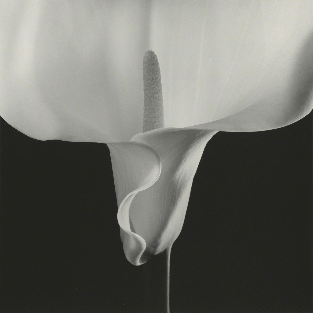 Robert Mapplethorpe Hasselblad Camer