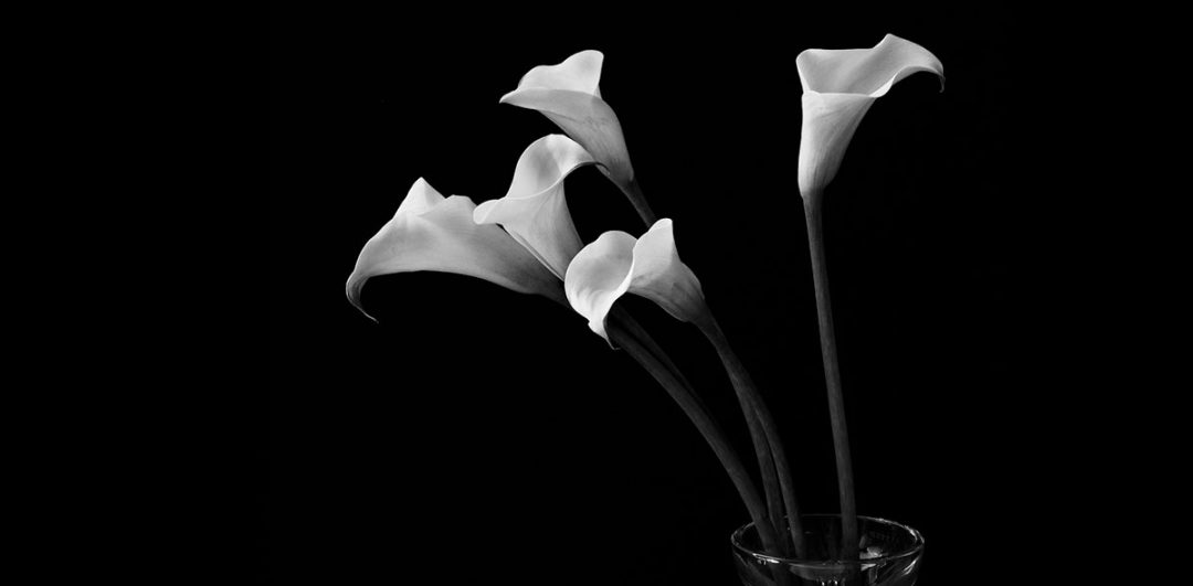 Robert Mapplethorpe – Flowers