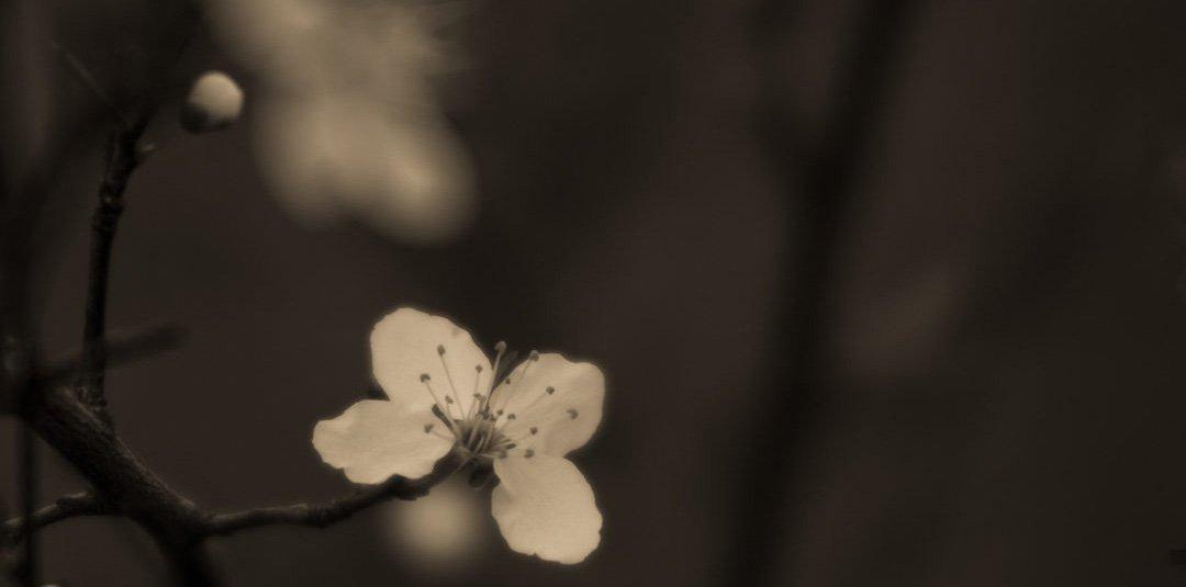 Isabel Curdes – Dreams on Film