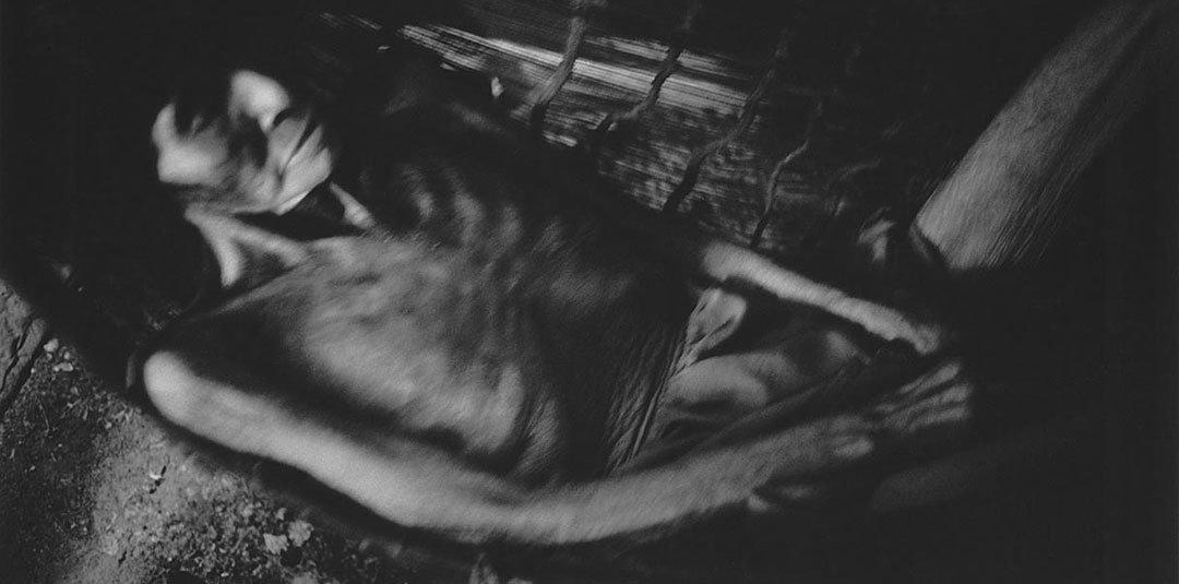Valdir Cruz – Rainforest Chronicles